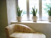 陶器鉢カバー例 スピカs-1 8号用サンセベリア スピカs-1 8号用 大きい観葉植物専門店ガーデントロピカ