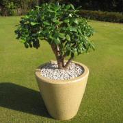 観葉植物を陶器鉢カバーに植え替えました