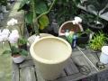 観葉植物を鉢カバーに植え替えます
